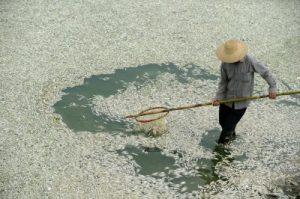 Chinese Fish Master