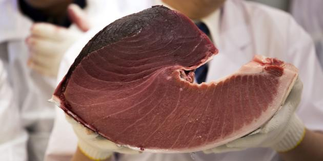 bluefin-tuna-was-the-only-fish-that-was-labeled-in-100-of-samples
